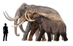 Mammoths_Man-1200x756.jpg format=1500w