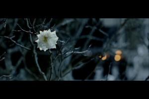 whitetreebeginstoflower
