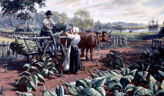 image12growingtobacco.jpg