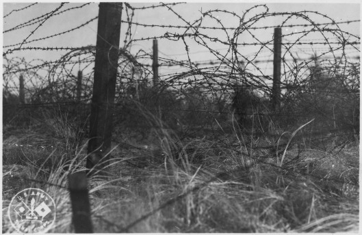 image11barbedwire.jpg