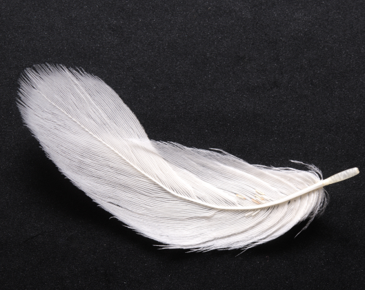 image4feather.png