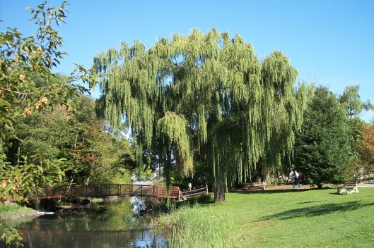 image1willow.jpg